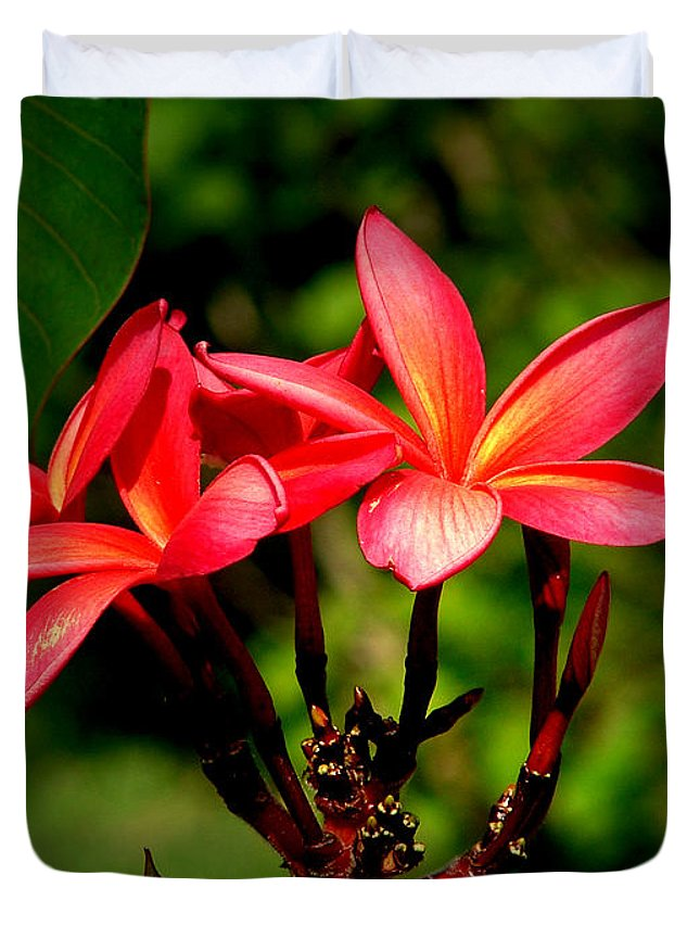 Frangipani Duvet Cover featuring the photograph Frangipani by David Weeks