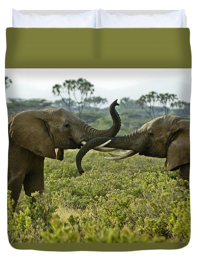 Africa Duvet Cover featuring the photograph Getting Acquainted by Michele Burgess
