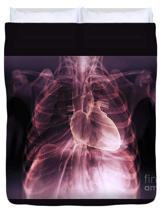 Rib Cage Duvet Cover featuring the photograph Heart Within The Chest by Science Picture Co