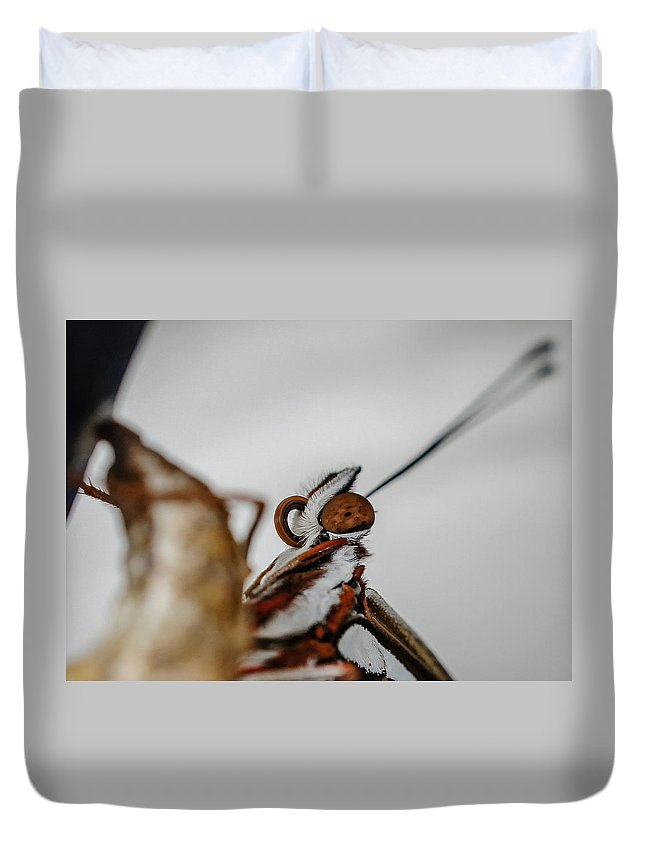 Monarch Butterfly Duvet Cover featuring the photograph Here's Looking At You by TK Goforth