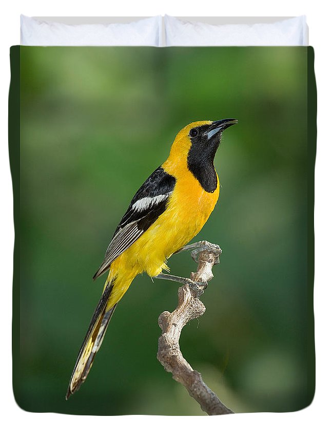 Fauna Duvet Cover featuring the photograph Hooded Oriole by Anthony Mercieca