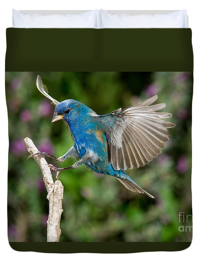 Fauna Duvet Cover featuring the photograph Indigo Bunting by Anthony Mercieca