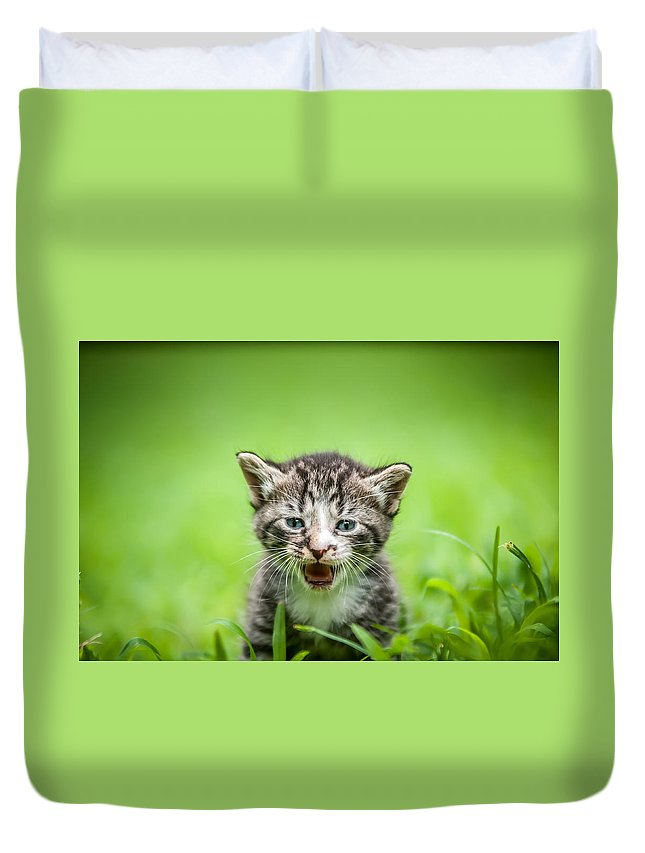 Animal Duvet Cover featuring the photograph Kitty In Grass by Alex Grichenko