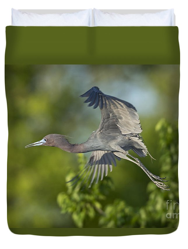 Little Blue Heron Duvet Cover featuring the photograph Little Blue Heron by Anthony Mercieca