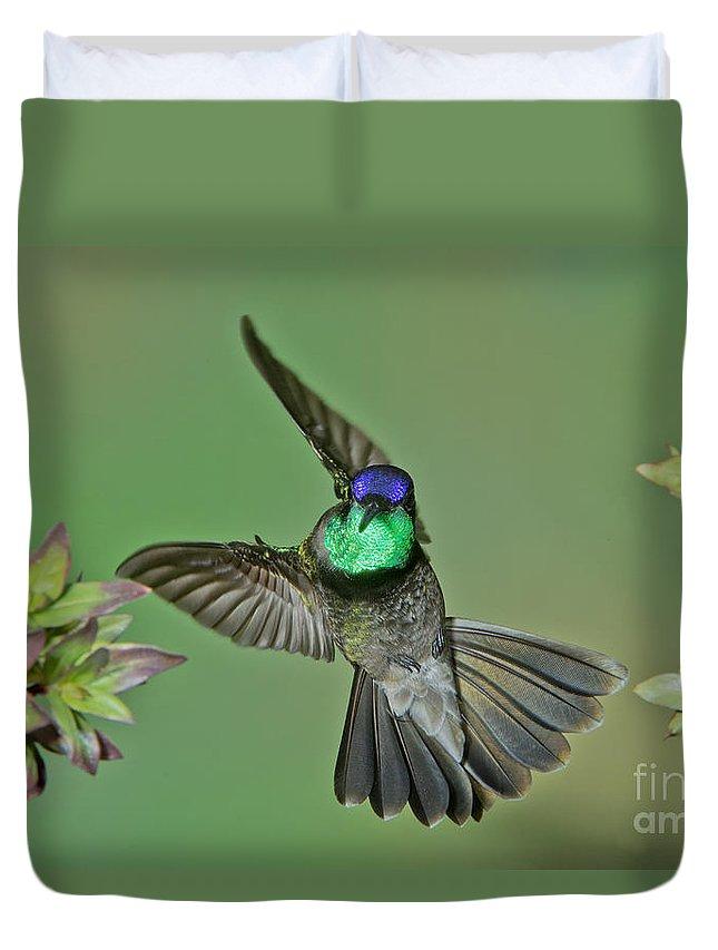 Magnificent Hummingbird Duvet Cover featuring the photograph Magnificent Hummingbird by Anthony Mercieca