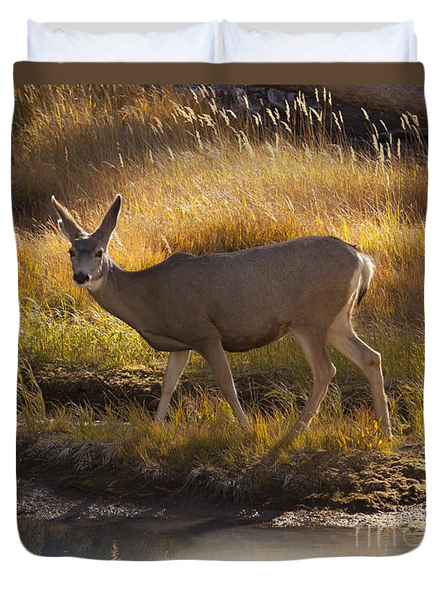 Deer Duvet Cover featuring the photograph Mule Deer  #3950 by J L Woody Wooden