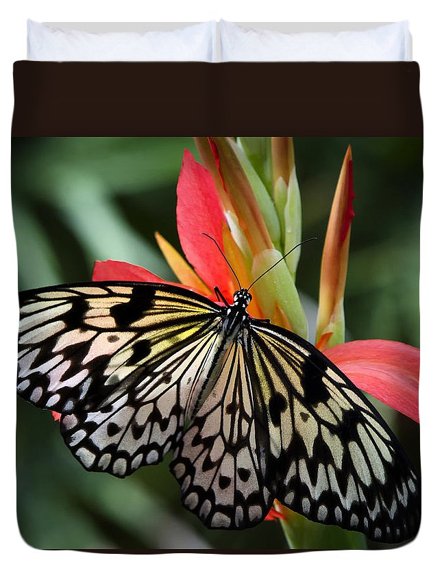 Paper Kite Butterfly Duvet Cover featuring the photograph Nature's Treasures by Saija Lehtonen
