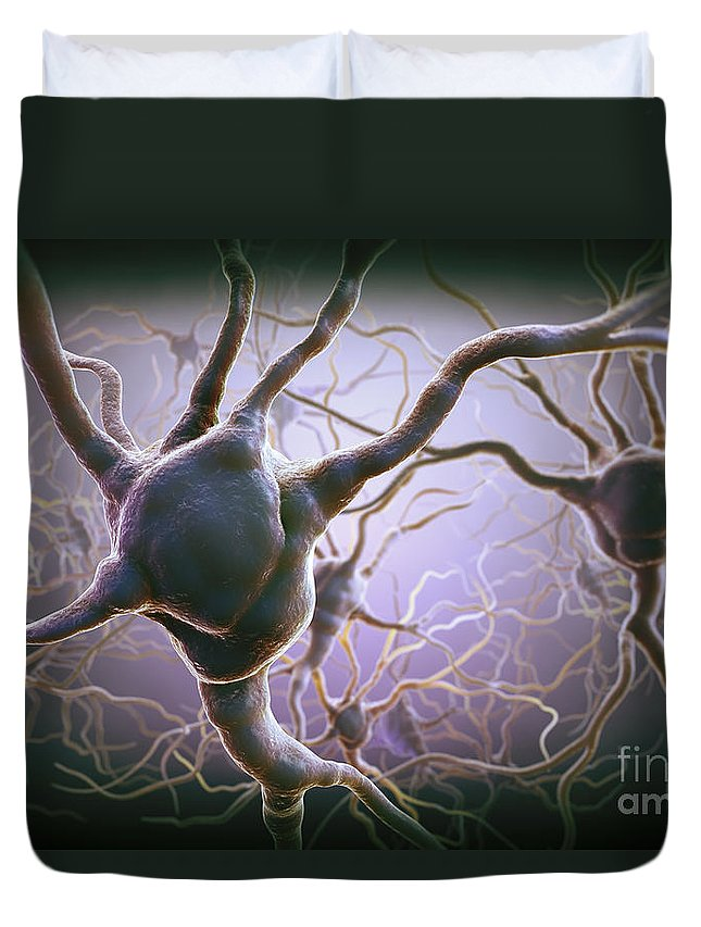 Anatomical Model Duvet Cover featuring the photograph Neuron by Science Picture Co