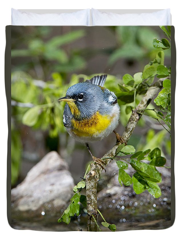 Northern Parula Duvet Cover featuring the photograph Northern Parula by Anthony Mercieca