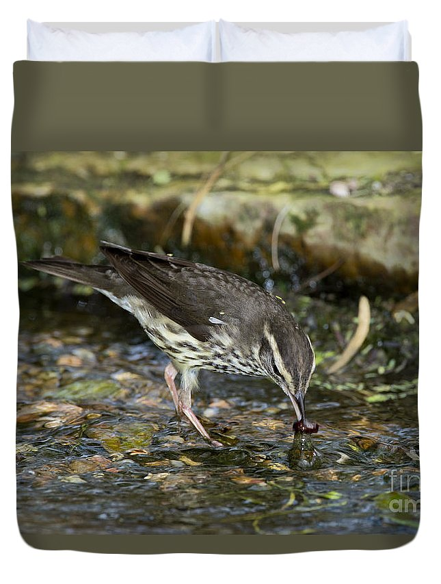 Northern Waterthrush Duvet Cover featuring the photograph Northern Waterthrush by Anthony Mercieca