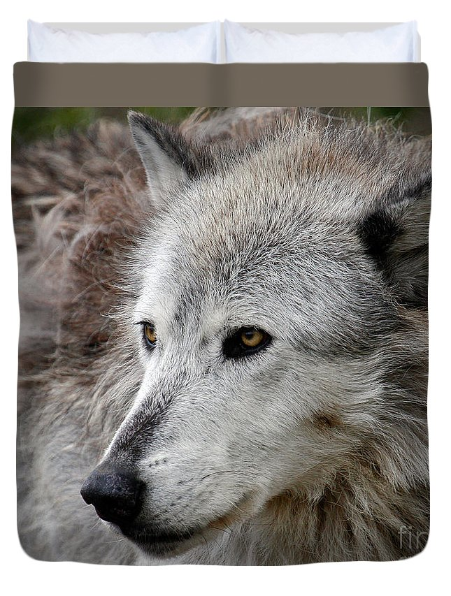 Wolf Art Duvet Cover featuring the photograph On Alert by Steve McKinzie