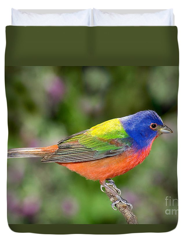 Fauna Duvet Cover featuring the photograph Painted Bunting by Anthony Mercieca