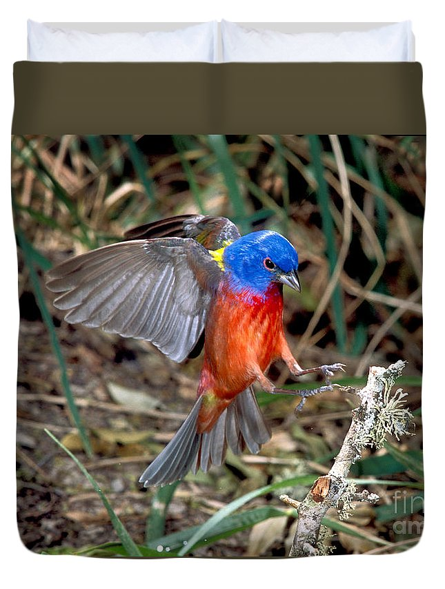 Fauna Duvet Cover featuring the photograph Painted Bunting Passerina Ciris by Anthony Mercieca