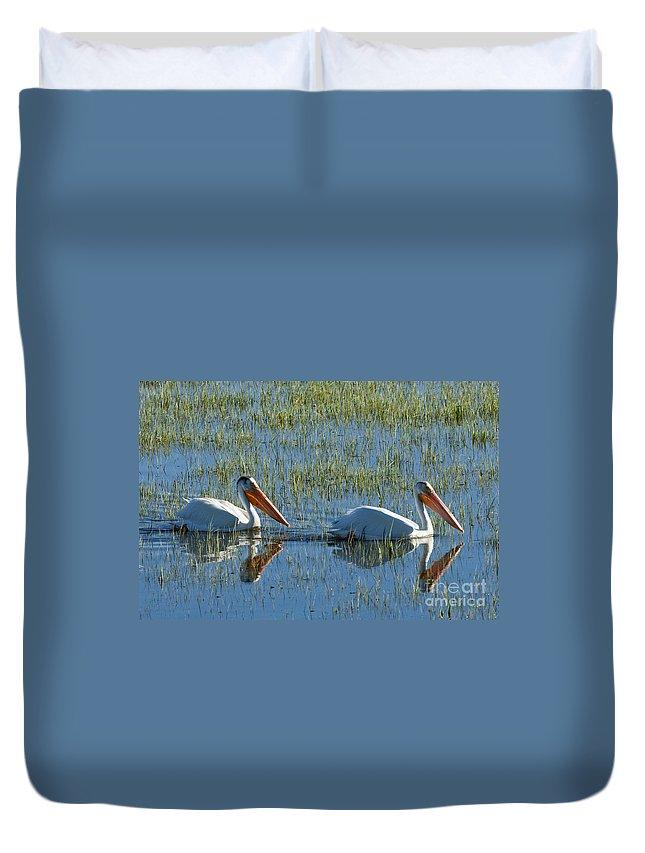 Birds Duvet Cover featuring the photograph Pelicans In Hayden Valley by Sandra Bronstein