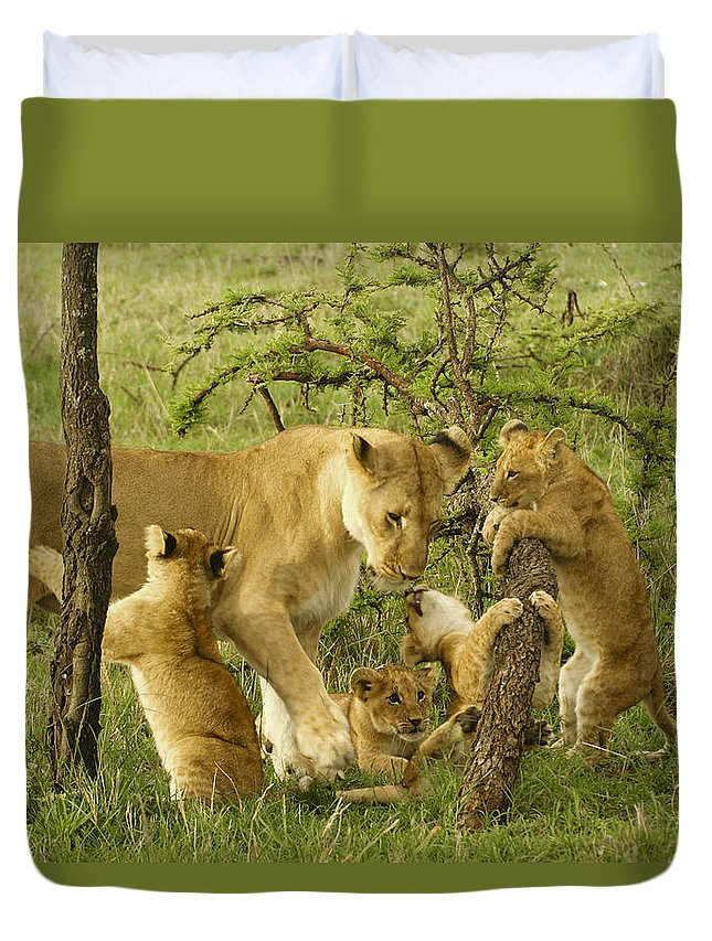 Lion Duvet Cover featuring the photograph Playing With Mom by Michele Burgess