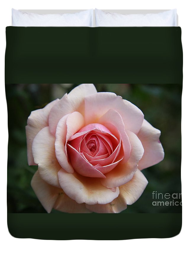 Rose Duvet Cover featuring the photograph Pure Beauty by Christiane Schulze Art And Photography