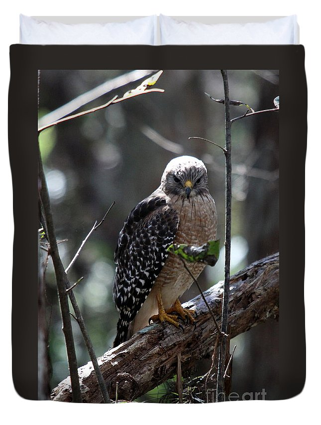 Hawk Duvet Cover featuring the photograph Red - Shouldered Hawk II by Christiane Schulze Art And Photography