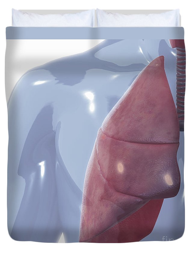 Lungs Duvet Cover featuring the photograph Respiratory System by Science Picture Co