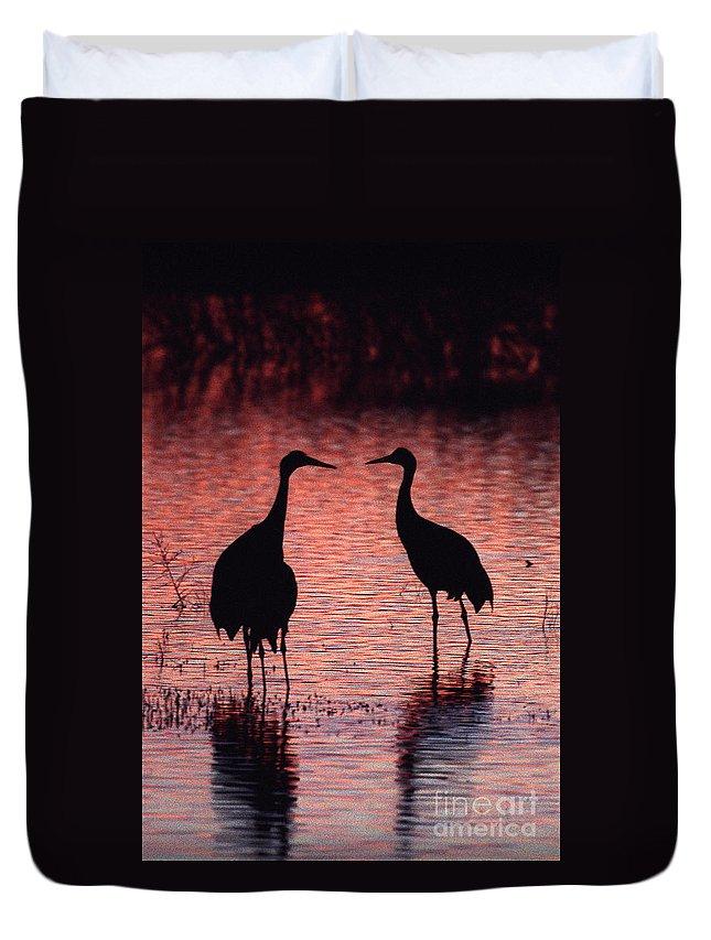 Birds Duvet Cover featuring the photograph Sandhill Cranes by Steven Ralser