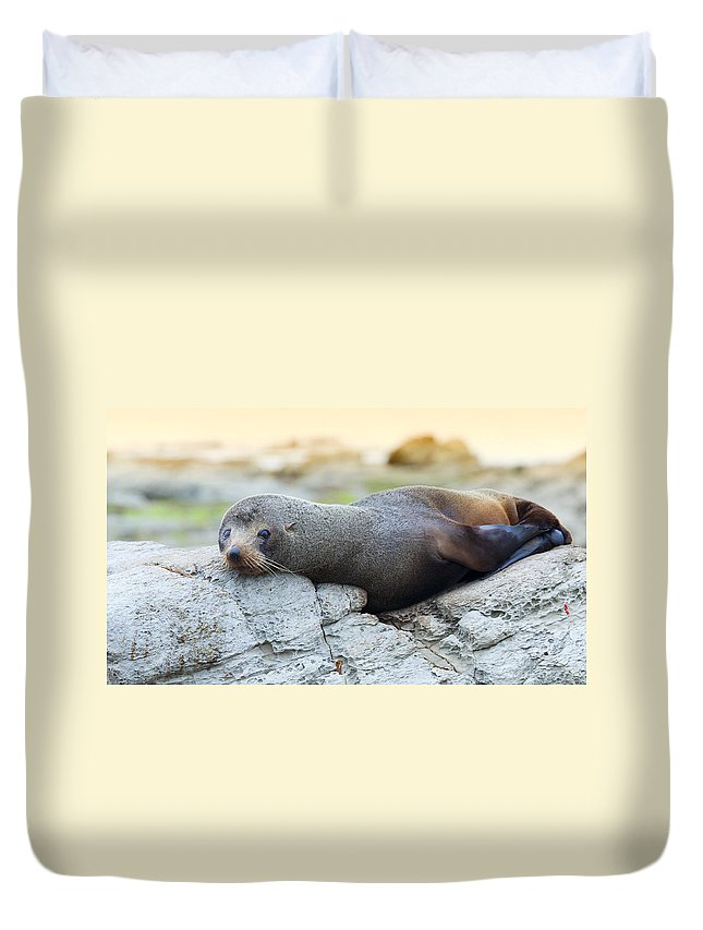 Hookers Duvet Cover featuring the photograph Sea Lion by Alexey Stiop