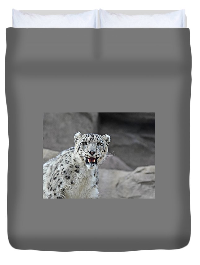 Animal Duvet Cover featuring the photograph Snow Leopard by Paul Fell