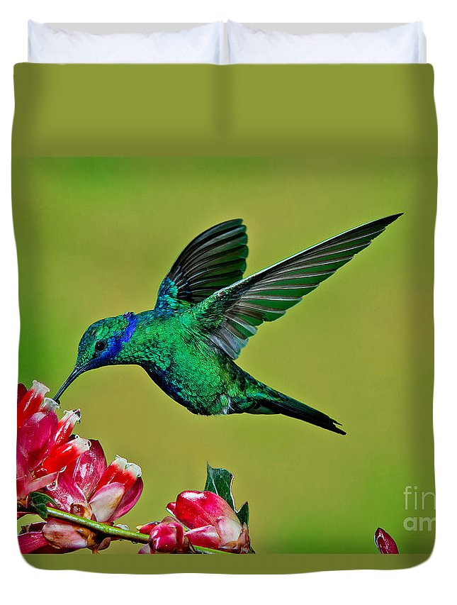 Sparkling Violetear Duvet Cover featuring the photograph Sparkling Violetear by Anthony Mercieca