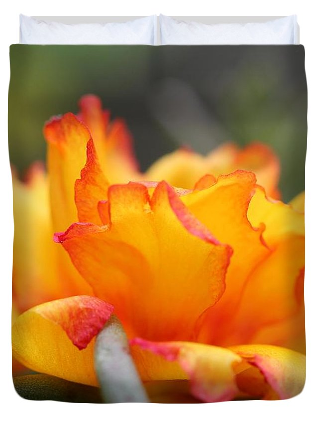 Mccombie Duvet Cover featuring the photograph Sundial Portulaca by J McCombie