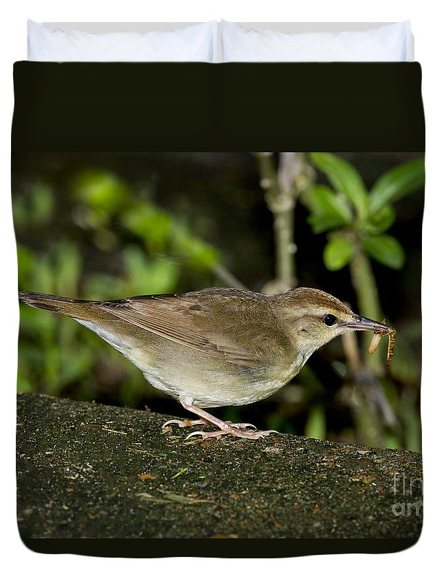 Swainson's Warbler Duvet Cover featuring the photograph Swainsons Warbler by Anthony Mercieca