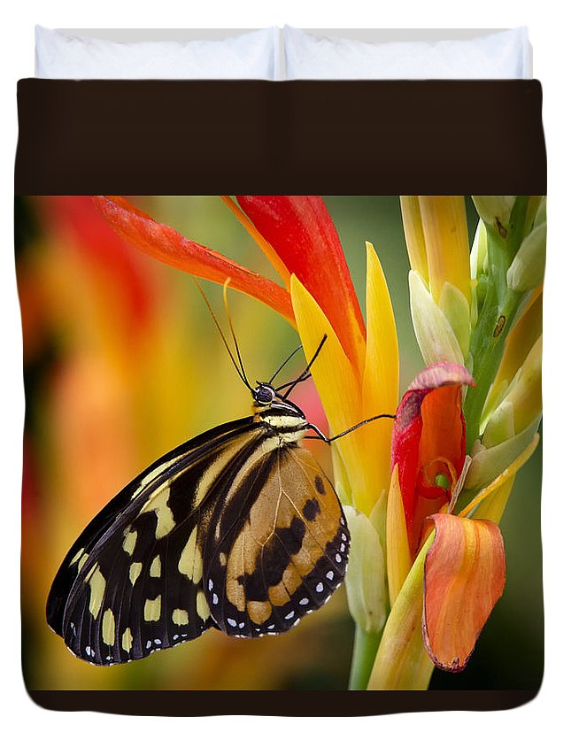 Postman Butterfly Duvet Cover featuring the photograph The Postman Butterfly by Saija Lehtonen