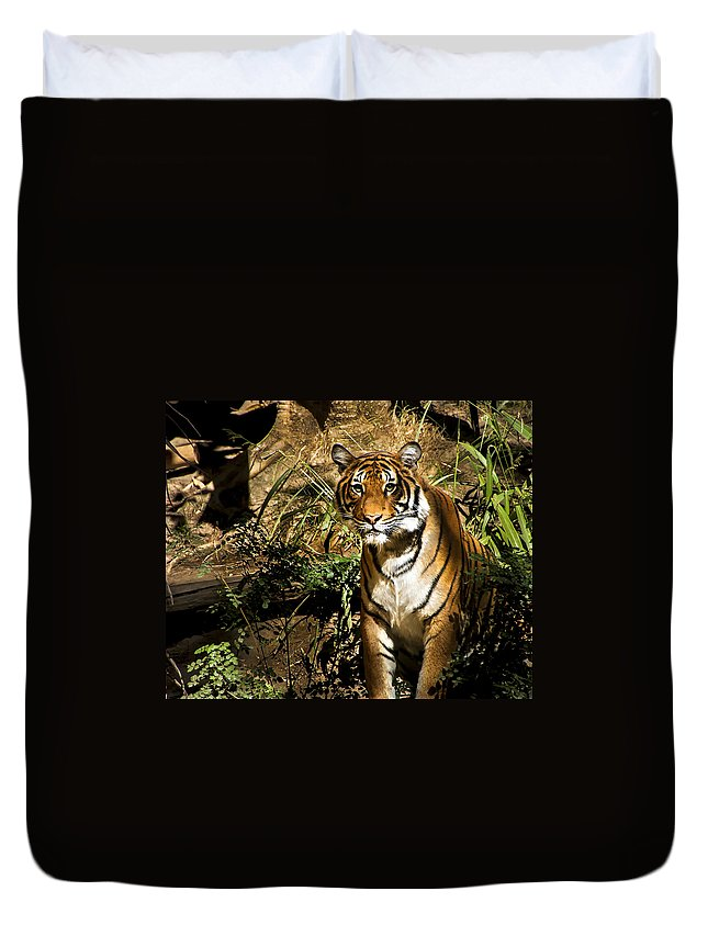 Tiger Duvet Cover featuring the photograph Tiger by Jon Berghoff