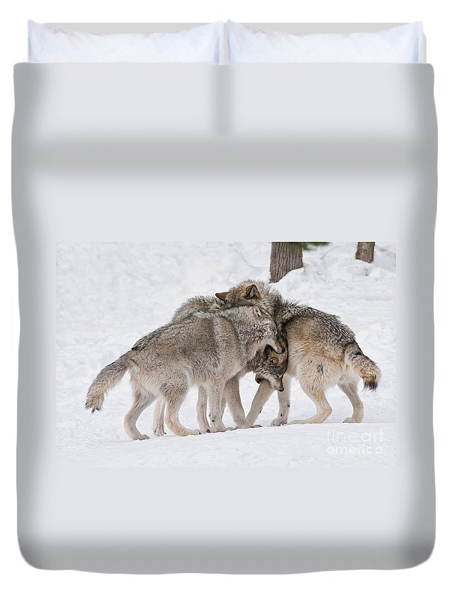 Timber Wolf Photography Duvet Cover featuring the photograph Timber Wolves by Wolves Only