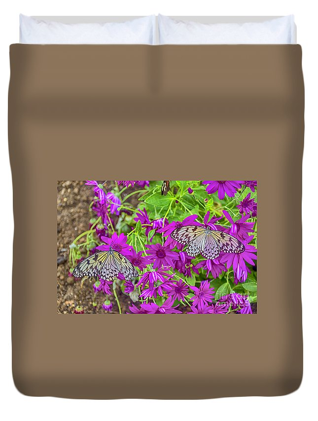 Tree Nymph Canvas Duvet Cover featuring the photograph 2 Tree Nymph Butterflies by Chris Thaxter