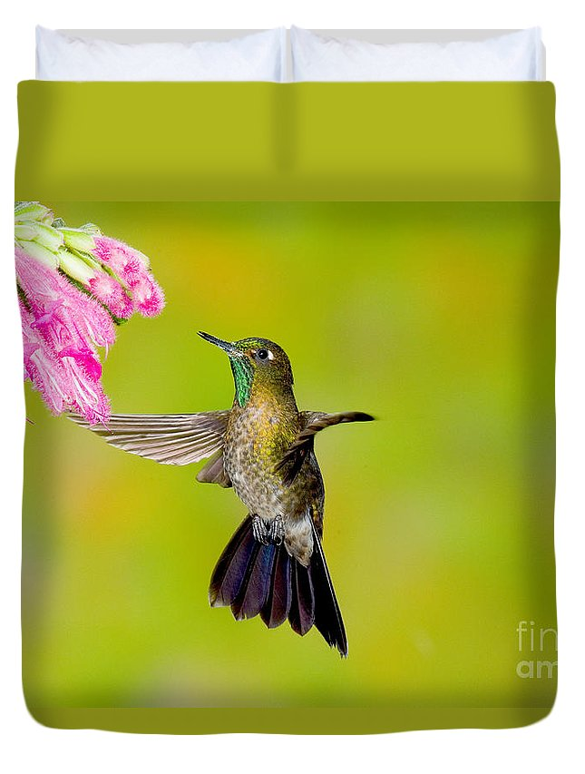 Fauna Duvet Cover featuring the photograph Tyrian Metaltail Hummingbird by Anthony Mercieca