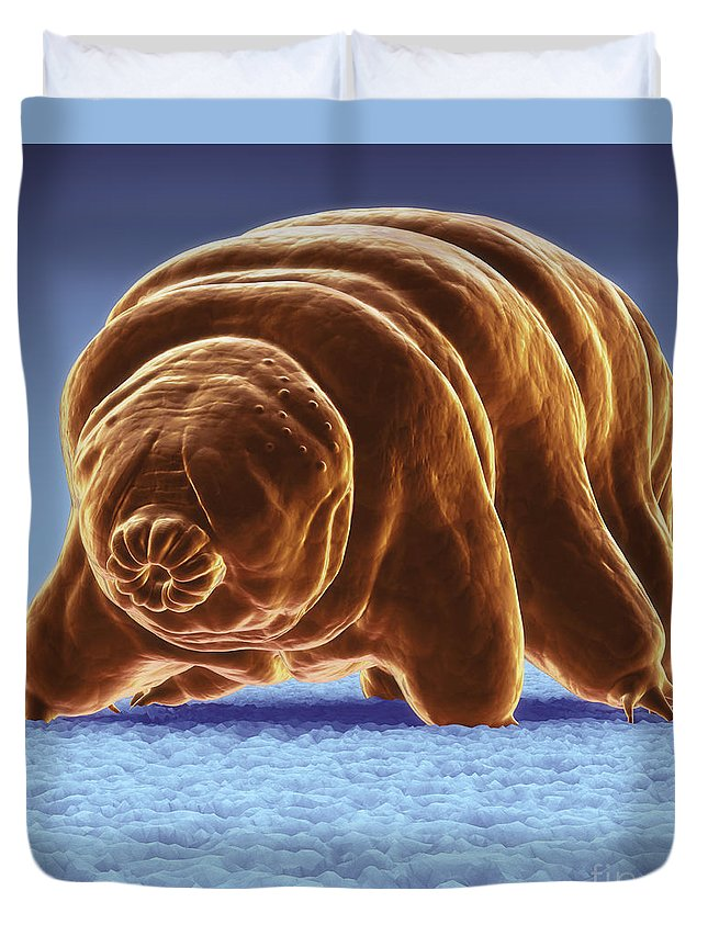 Protostomia Duvet Cover featuring the photograph Water Bear Tardigrades by Science Picture Co