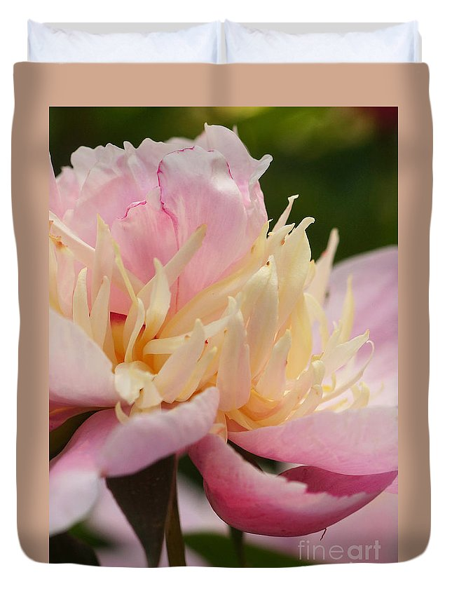 Flora Duvet Cover featuring the photograph White And Pink Peony by Rudi Prott