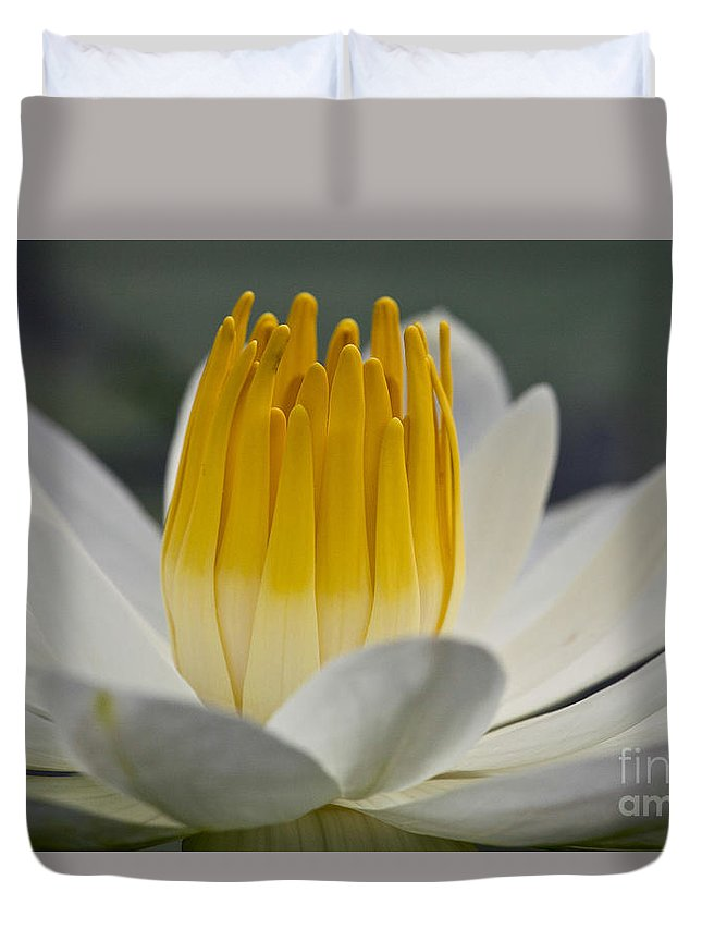 Water Llilies Duvet Cover featuring the photograph White Water Lily by Heiko Koehrer-Wagner