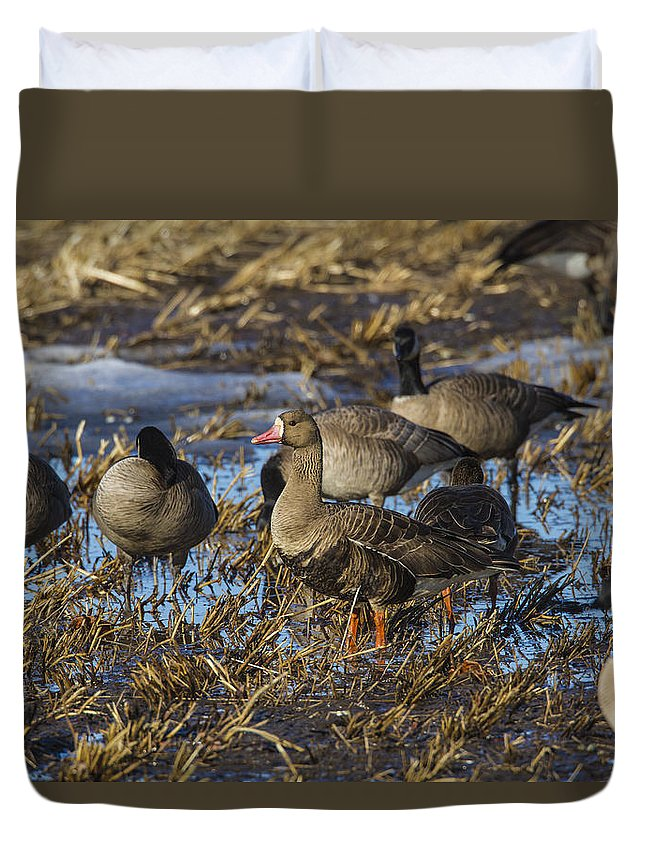 Doug Lloyd Duvet Cover featuring the photograph Whitefront Goose by Doug Lloyd