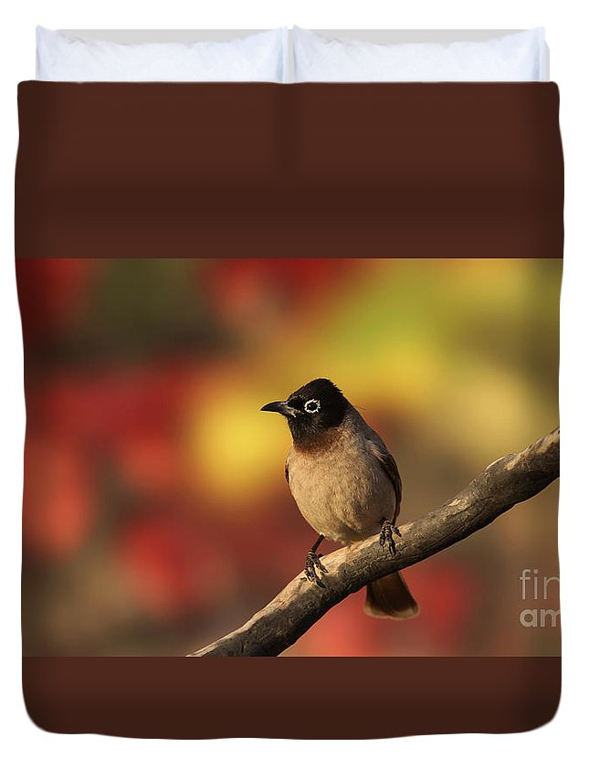 Pycnonotus Xanthopygos Duvet Cover featuring the photograph Yellow-vented Bulbul by Alon Meir