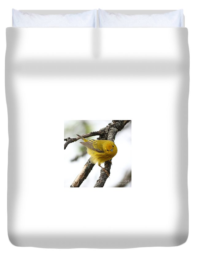 Yellow Warbler Duvet Cover featuring the photograph Yellow Warbler by Lori Tordsen
