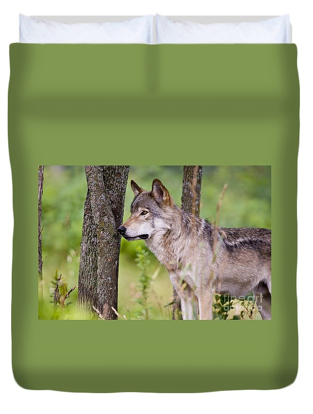 Timber Wolf Photography Duvet Cover featuring the photograph Timber Wolf by Wolves Only