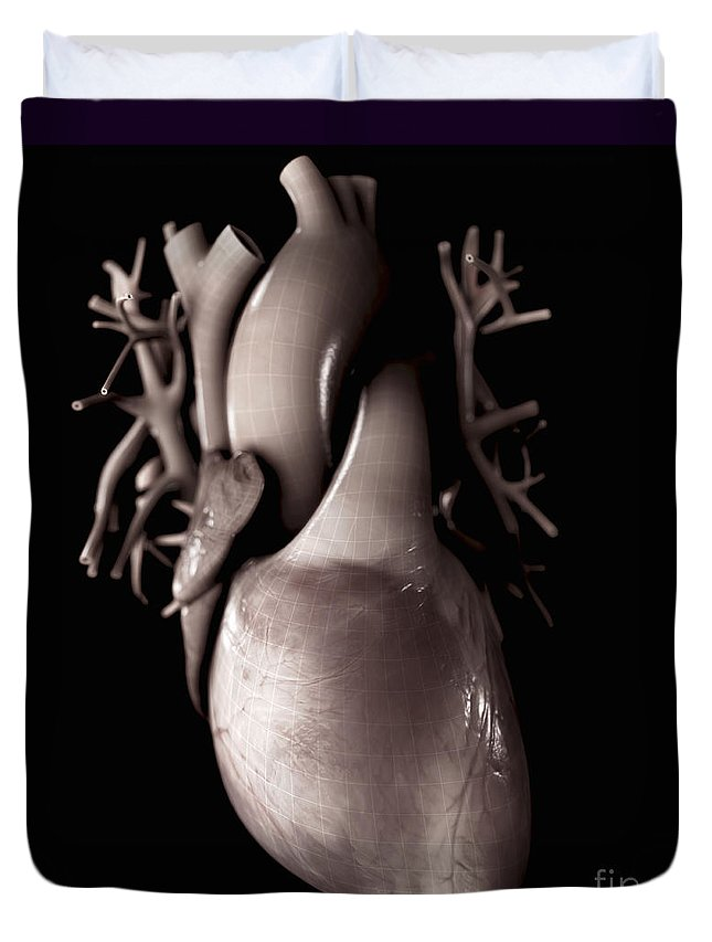 Organs Duvet Cover featuring the photograph Heart Anatomy by Science Picture Co
