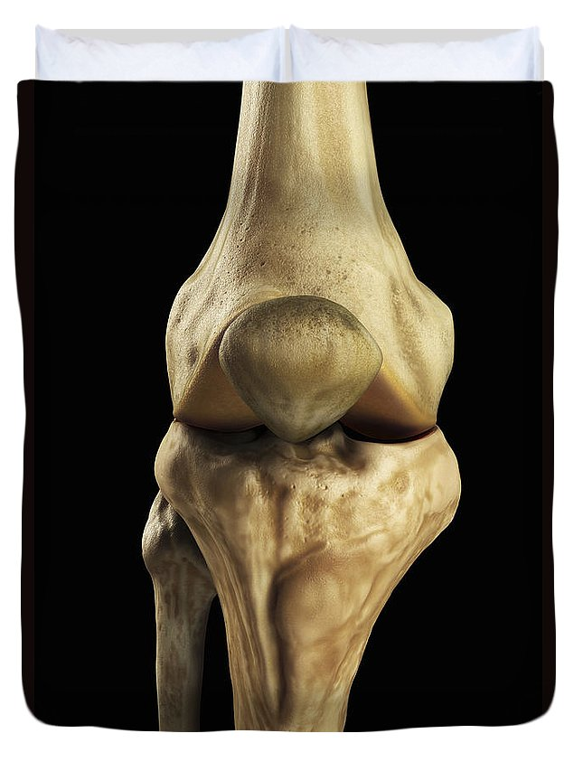 Biomedical Illustration Duvet Cover featuring the photograph Knee Bones Right by Science Picture Co