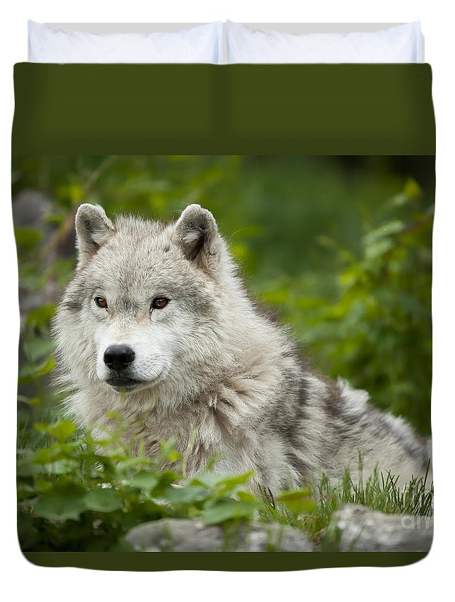 Arctic Wolf Photography Duvet Cover featuring the photograph Arctic Wolf by Wolves Only