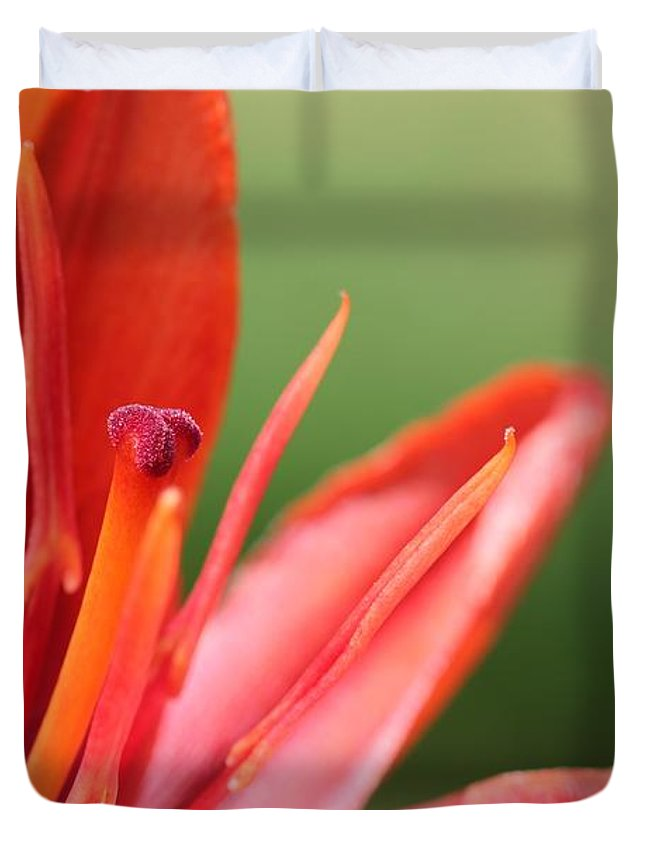 Mccombie Duvet Cover featuring the photograph Asiatic Lily Named Red Twin by J McCombie