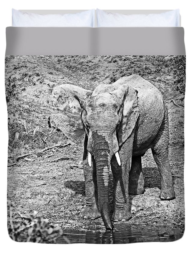 Elephant Bull Duvet Cover featuring the photograph At The Waterhole by Douglas Barnard