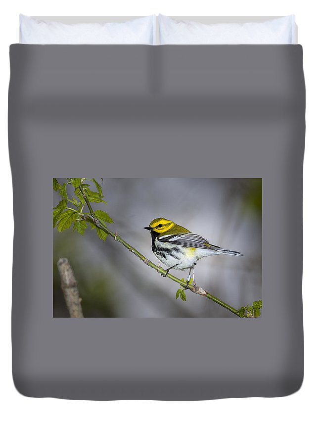 Animal Duvet Cover featuring the photograph Black Throated Green Warbler by Jack R Perry