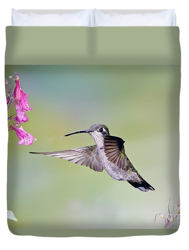 Animal Duvet Cover featuring the photograph Blue-throated Hummingbird by Anthony Mercieca