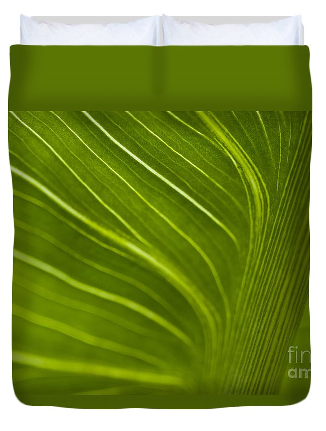 Beauty Duvet Cover featuring the photograph Calla Lily Stem Close Up by Jim Corwin