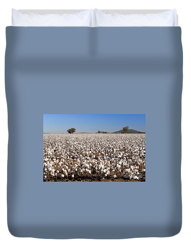 Agriculture Duvet Cover featuring the photograph Cotton Fields by Tim Hester