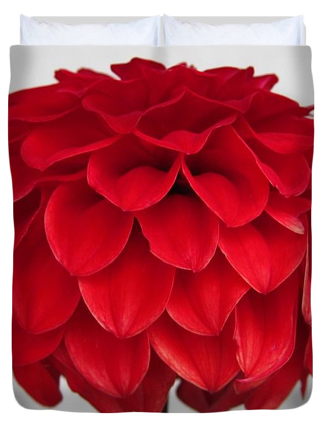 Mccombie Duvet Cover featuring the photograph Dahlia Named Ali Oop by J McCombie